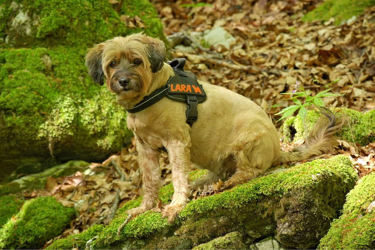 Best Harness For Small Dogs In 2020: Finding The Right Fit For Your Dog