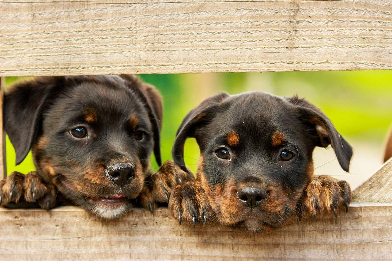 Which Dog Breed Group Do You Belong To?