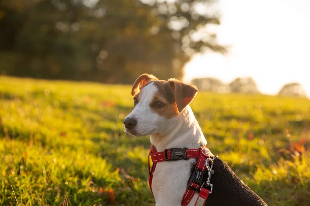 What Kind Of Dog Is The Frasier Dog?