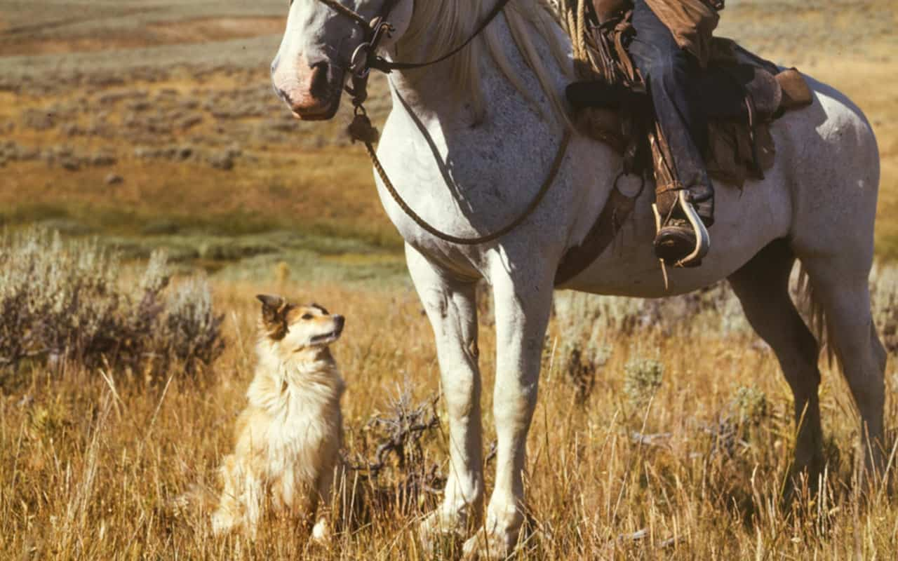 100+ Classic Western Dog Names For Your New Dog