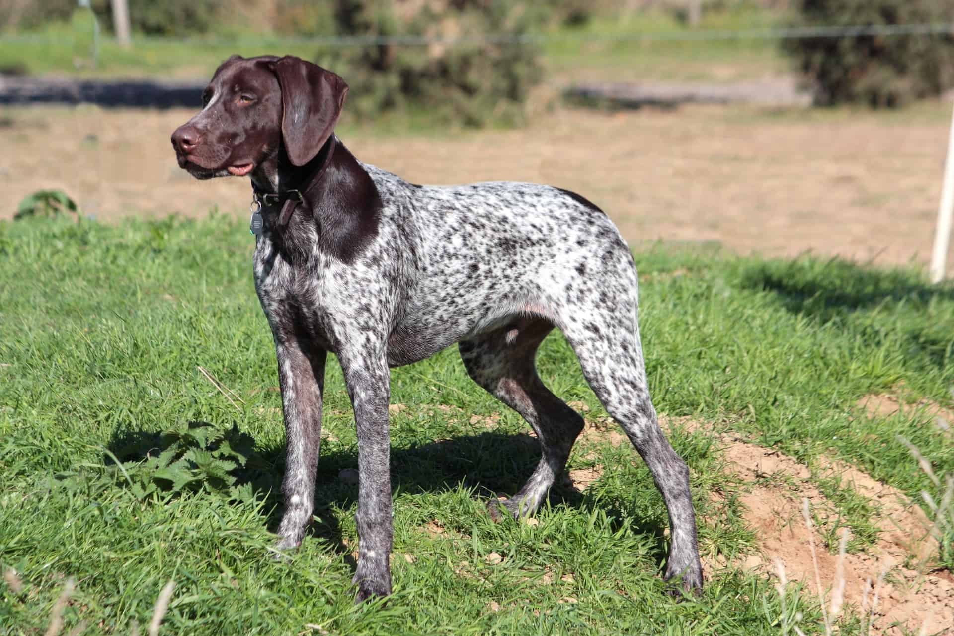 100 Hunting Dog Names For Your Talented New Pup
