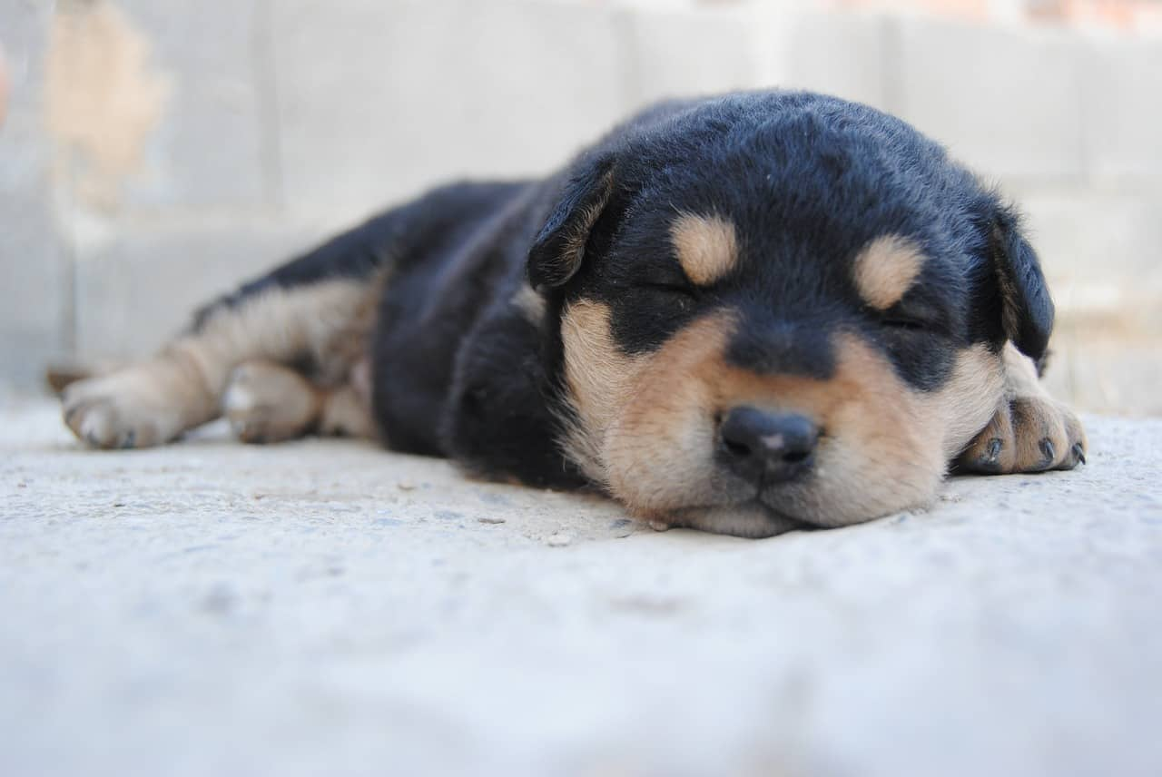 Why Does My Puppy Snore?