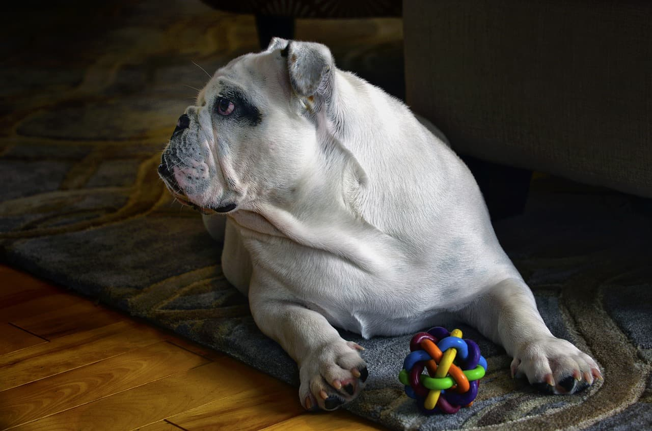 10 Best Amazing Bulldog Toys In 2020