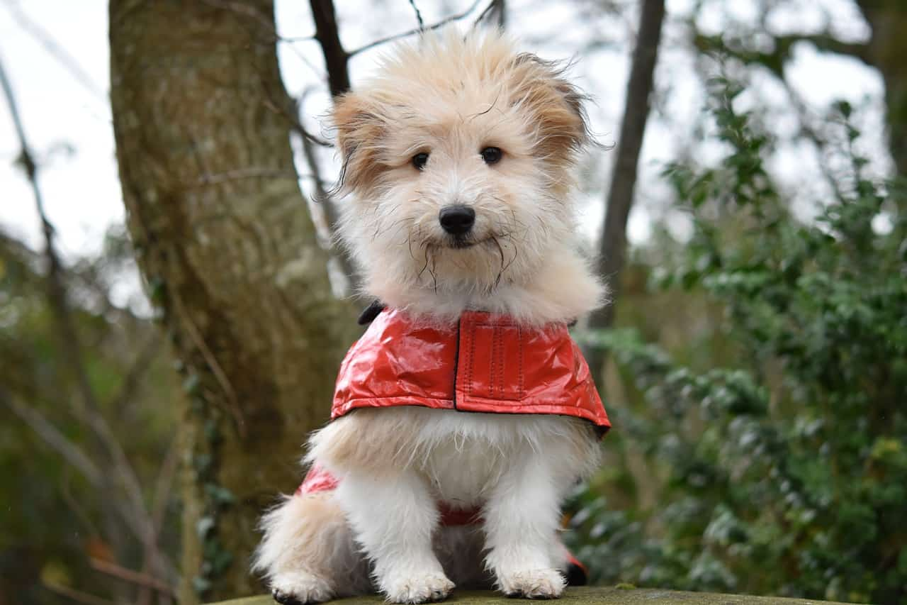 7 Best Waterproof Dog Coats in 2020