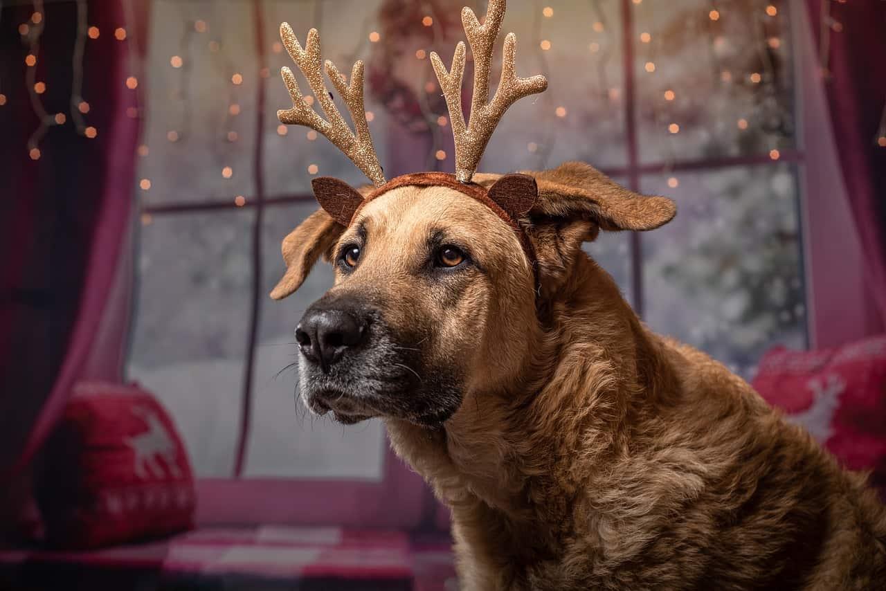 130+ Festive Christmas Dog Names