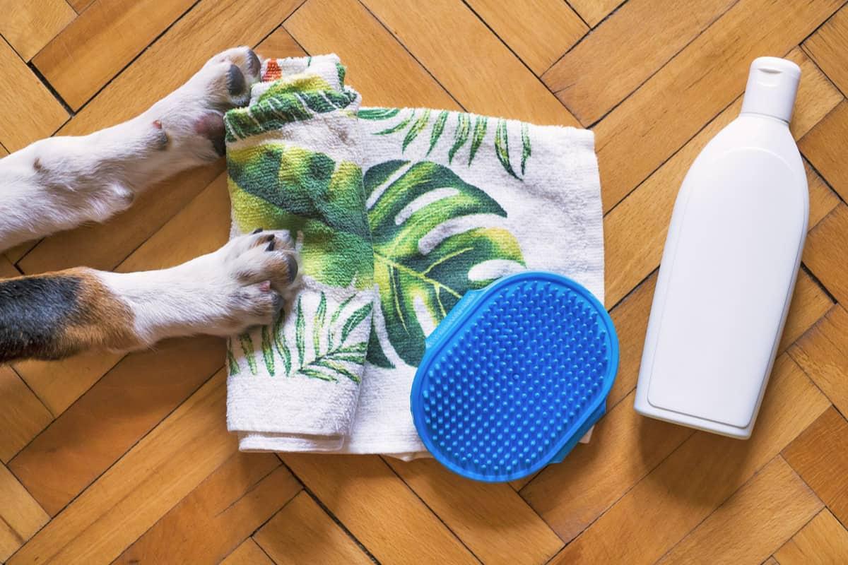 9 Best Hypoallergenic Dog Shampoos In 2020
