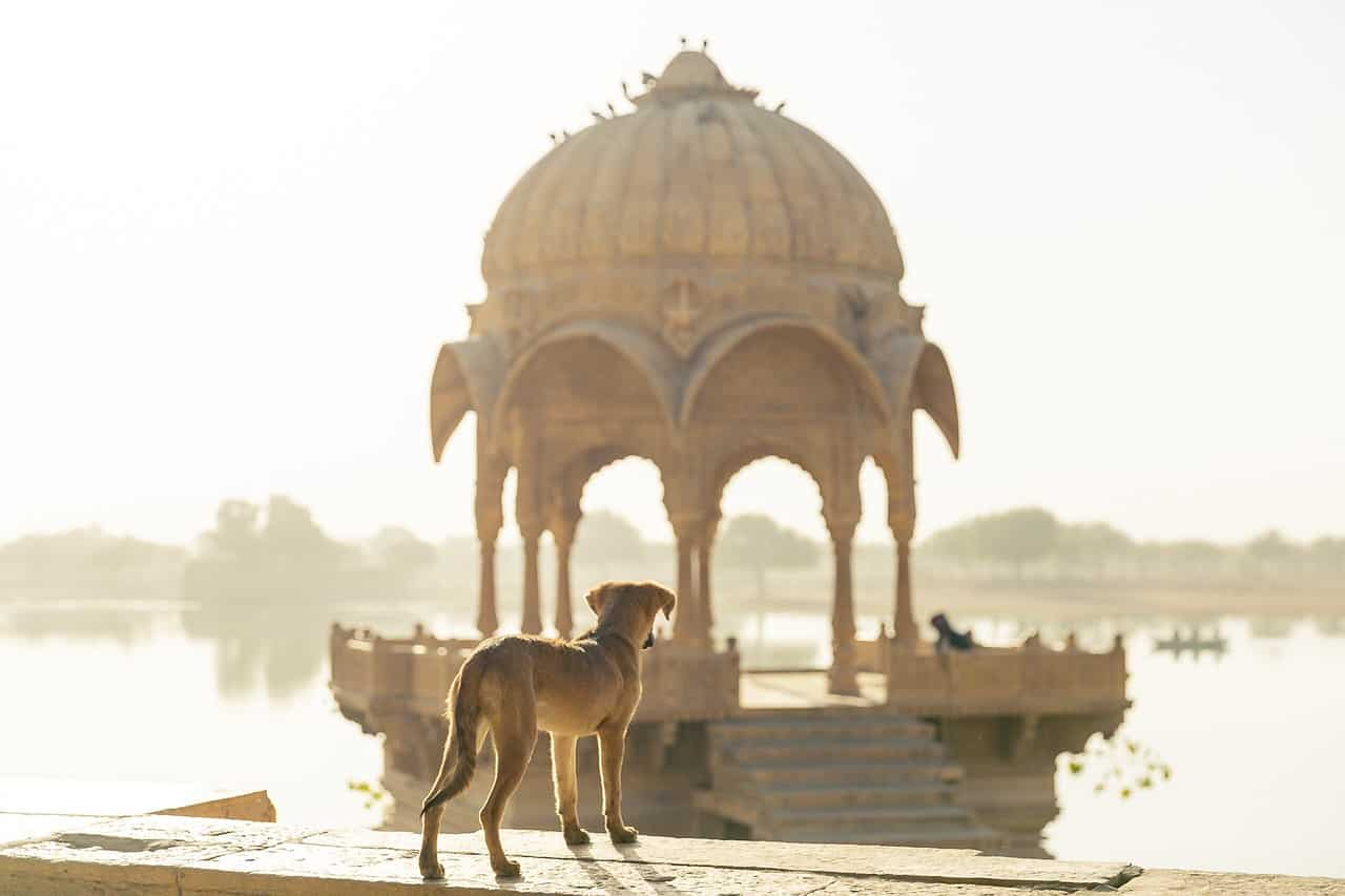 155+ Fantastic Indian Dog Names