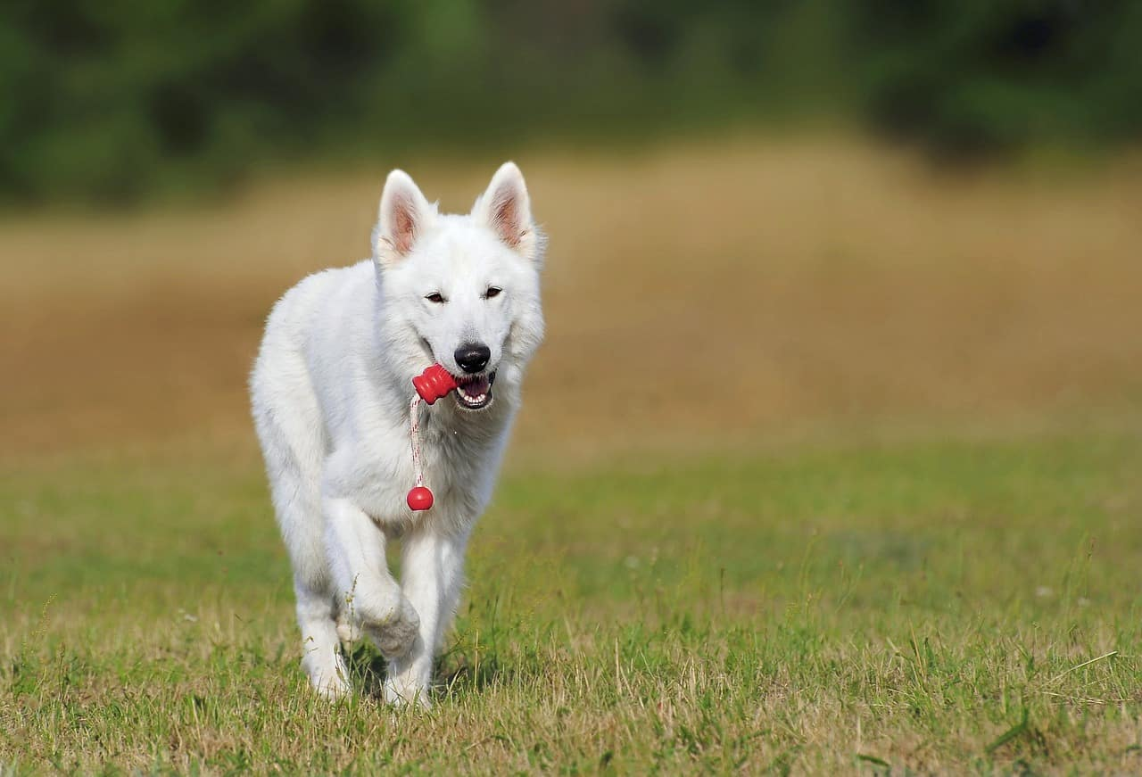 130+ Perfect White Dog Names For Your New Dog