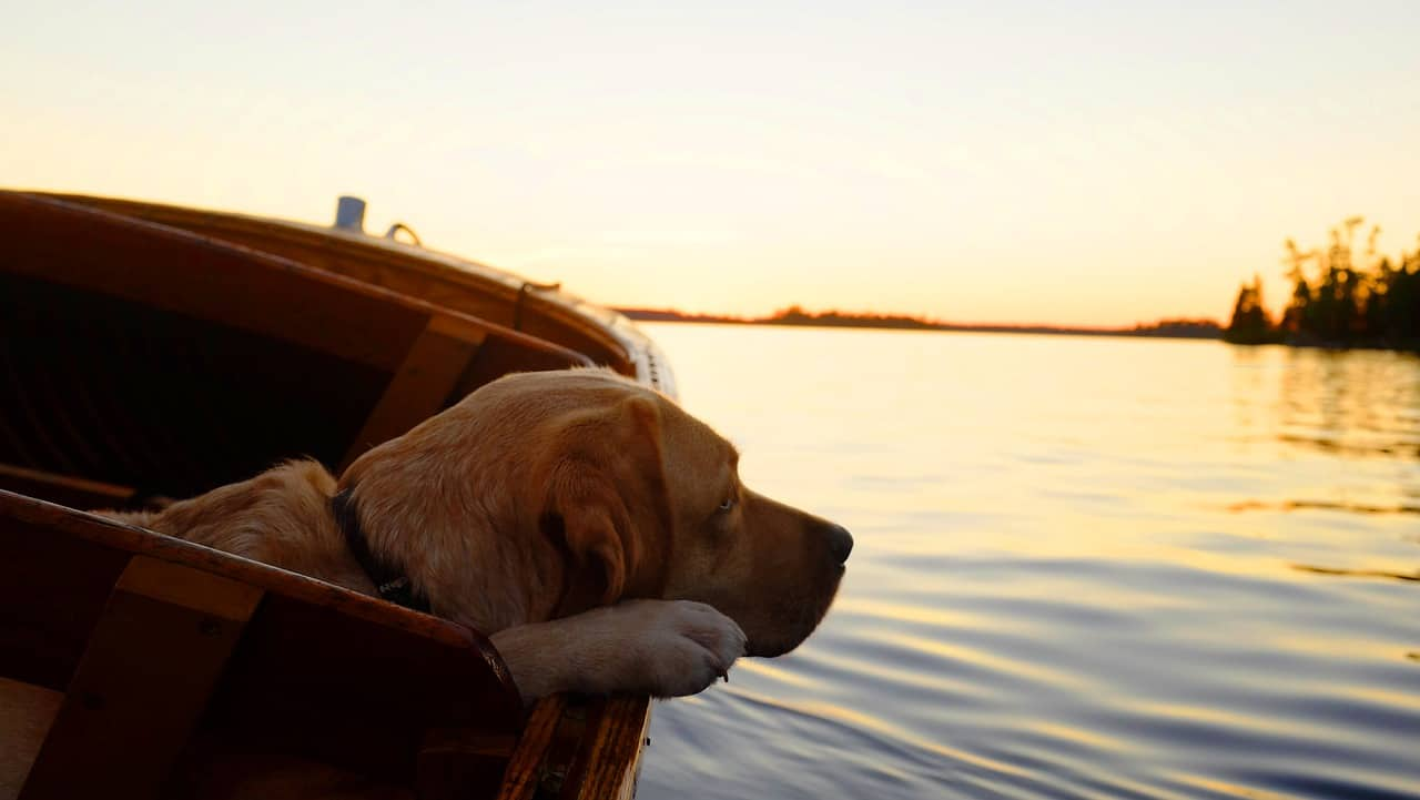 a labrador retriever resting on a boat in a lake