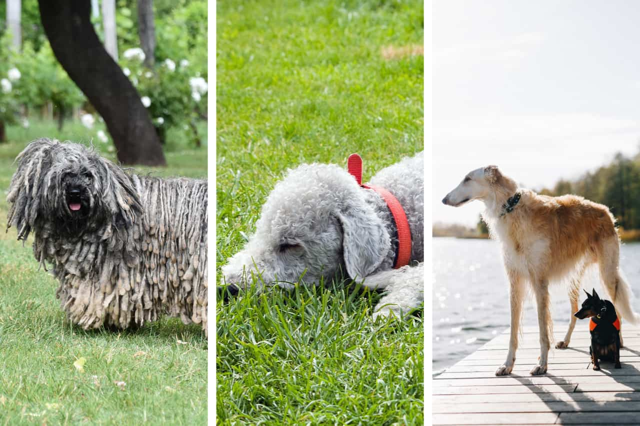 10 Must-See Exotic Dog Breeds From Around The World