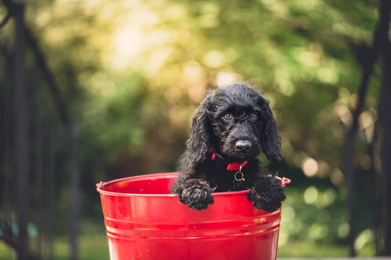 199+ Perfect Unisex Dog Names For Your New Puppy