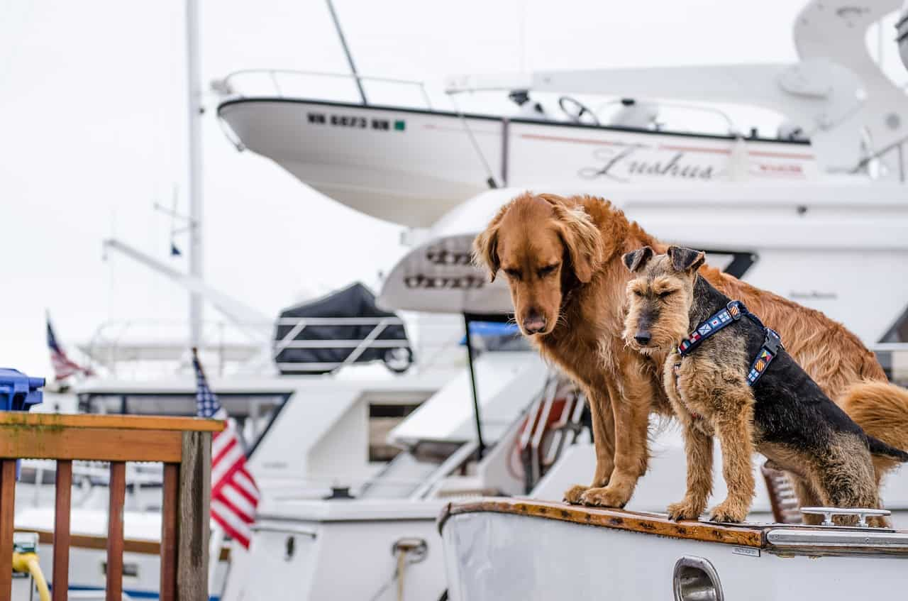 "Best Dogs For Boats: These Dogs Fit The ""Boat Life"""