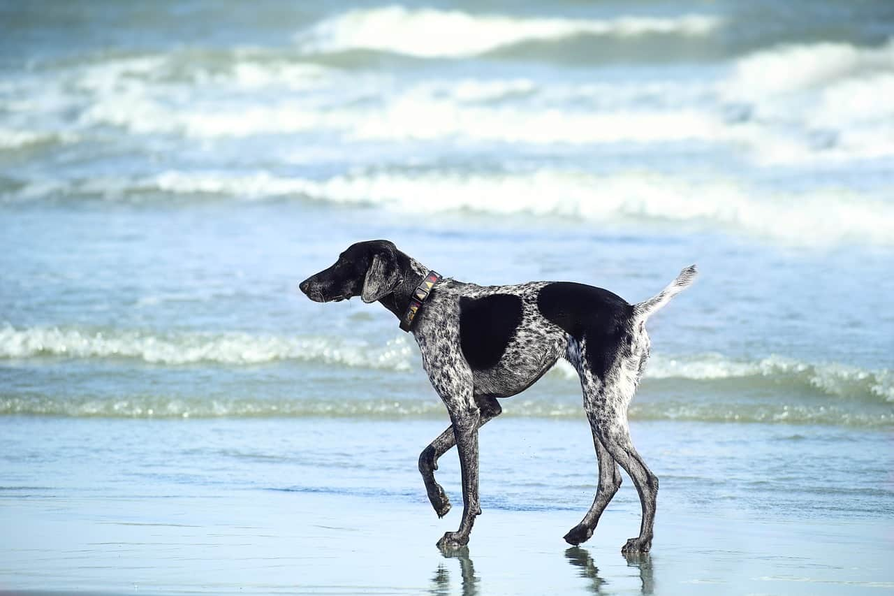 Best Dogs For Florida: Which Dog Should You Get?