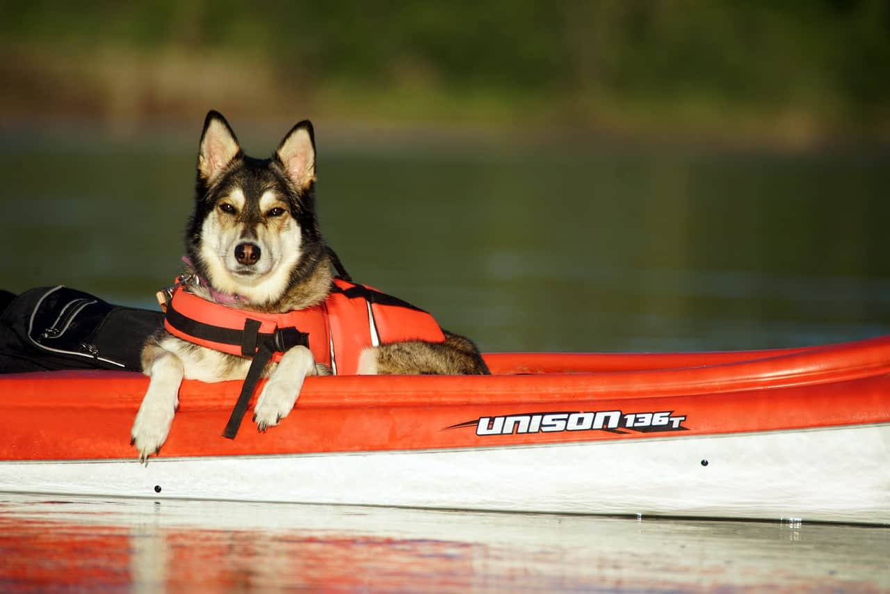 Best Dogs For Kayaking: Dogs That Enjoy The Water!