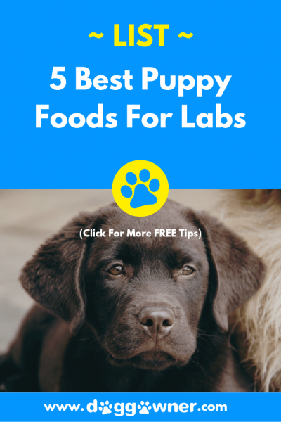 The best puppy food for labs pinterest image
