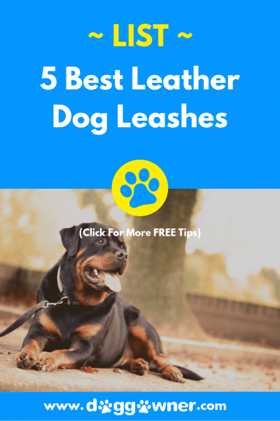 The best leather dog leashes DoggOwner pinterest image