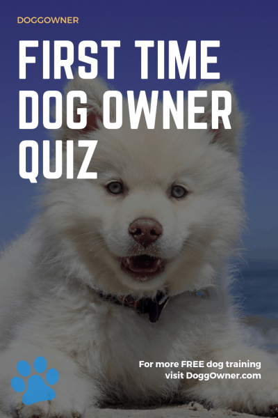 First time dog owner quiz pinterest image