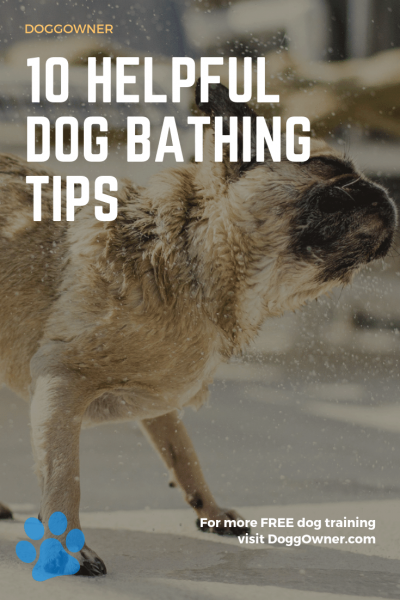 The 10 helpful dog bathing tips pinterest image