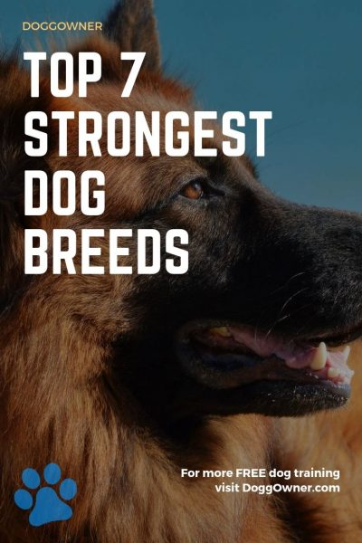 Top 7 strongest dog breeds pinterest image