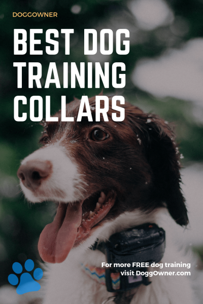 best dog training collars pinterest image