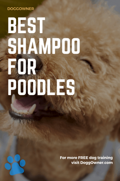 Best shampoo for poodles pinterest image
