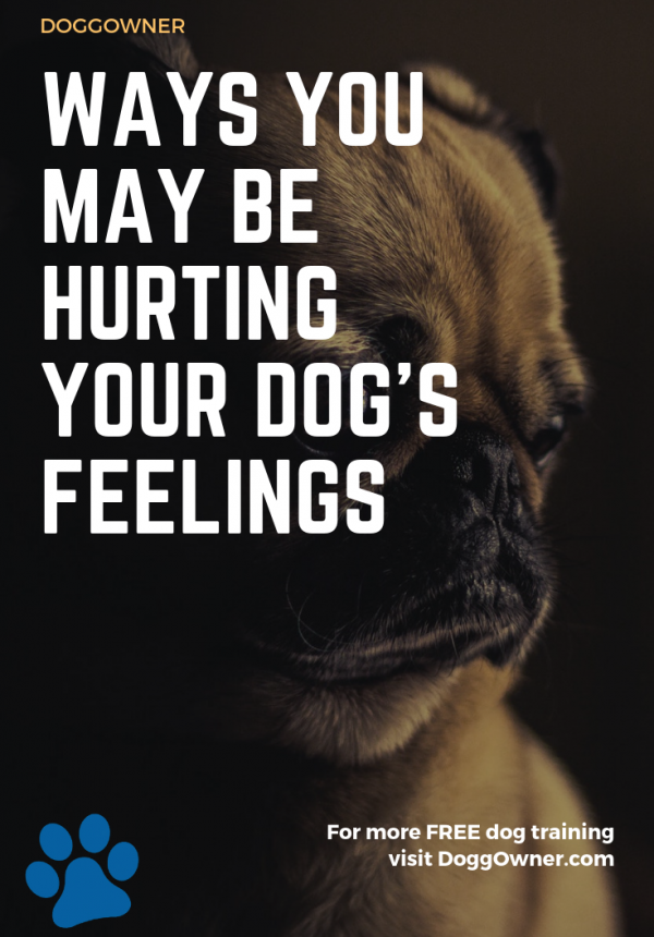 ways you could be hurting your dog's feelings pinterest image