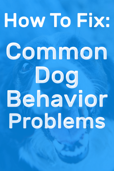 Common dog behavior problem pinterest picture