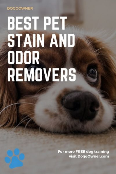 Best pet stain and odor remover pinterest image