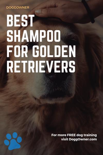 Best shampoo for golden retriever pinterest image