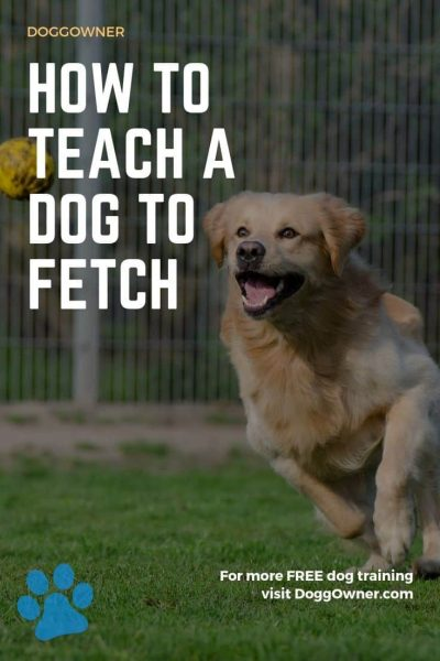 How to teach a dog to fetch pinterest image.