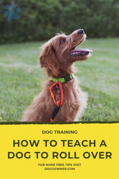 How to teach a dog to roll over Pinterest image